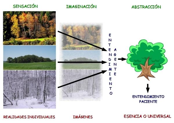 Imagen compuesta de diferentes fotografías de árboles que muestra de forma esquemática el proceso de la sensación a la abstracción